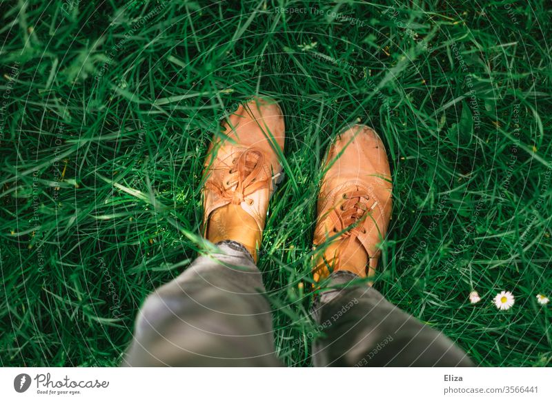 Eine Person steht in der grünen Wiese, man sieht nur ihre Beine und Schuhe von oben betrachtet Füße Sommer Sonnenlicht Gänseblümchen Gras Rasen Garten Natur