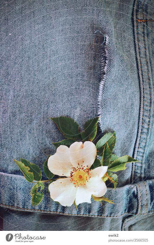 Übereinkunft Blume Blüte Heckenrose Rosenblüte Blütenkranz Blütenblätter Blätter Hose Jeans alt ausgewaschen arrangiert Stilleben Textfreiraum oben