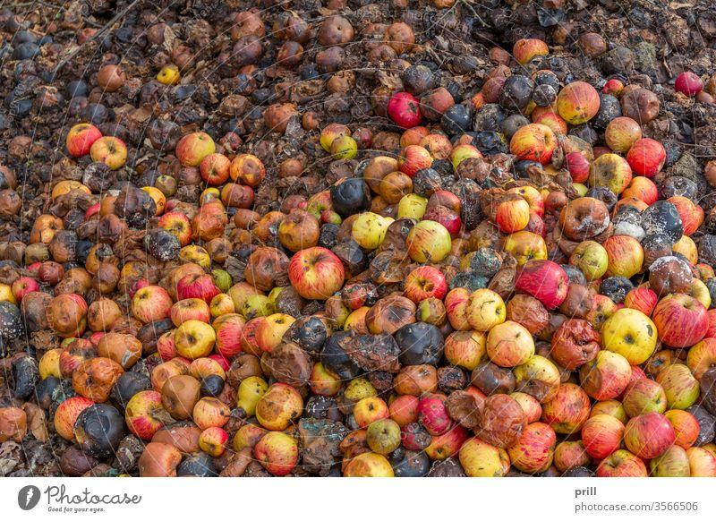 faulende Äpfel apfel verrotten Verfall Haufen Frucht kompost Nebel viele abfall Biografie schimmel verschimmeln erhöhter blickwinkel formatfüllend ausschnitt