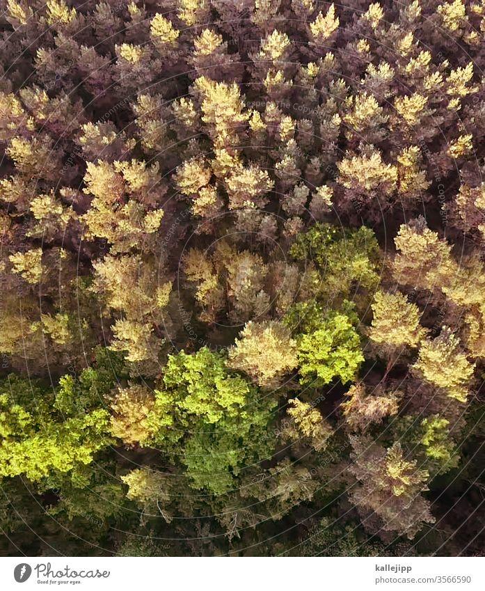 wald aus der vogelperspektive Wald Drohnenfoto Drohnenaufnahme Mischwald Sonnenlicht grün naturschutz Natur Farbfoto Baum Außenaufnahme Menschenleer Umwelt