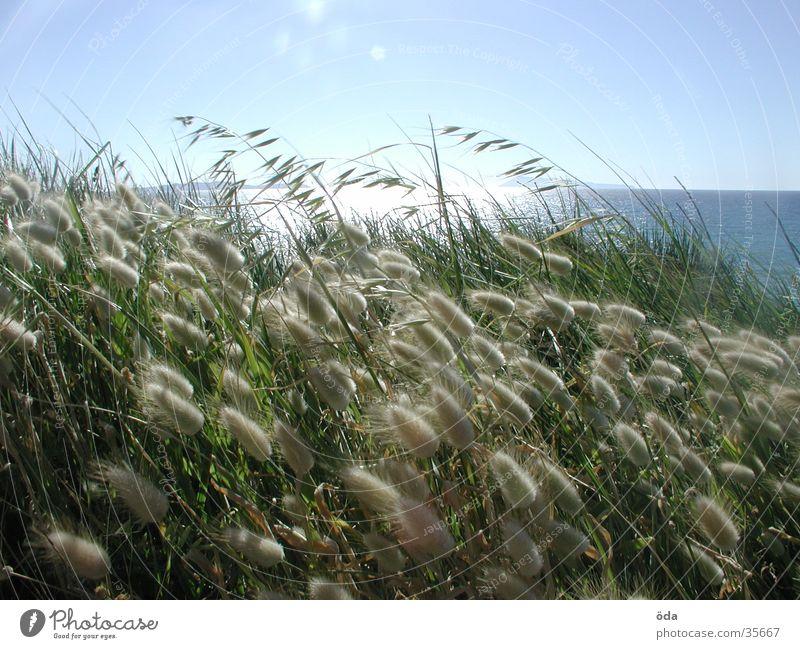korfu anders Sonne Meer Gras Weizen
