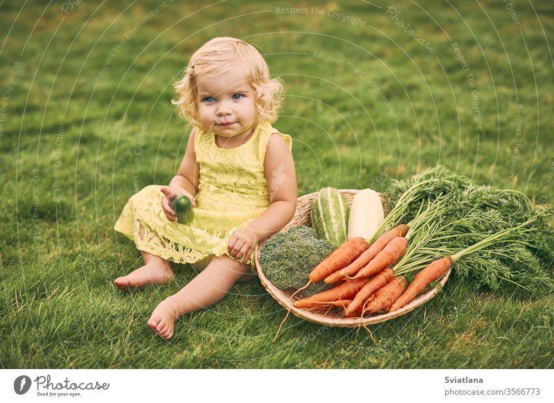 Ein kleines blondes Mädchen in einem gelben Kleid, barfuß, hält eine Gurke in der Hand, sitzt neben einem großen Korb mit Gemüse auf dem Gras. Gesundes Essen, grüne vegetarische Kost.