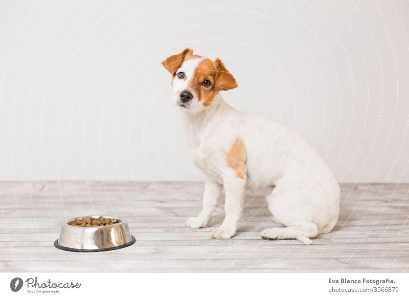 süßer kleiner Hund sitzt und wartet darauf, seinen Napf mit Hundefutter zu fressen. Haustiere im Haus. Konzept niedlich Schalen & Schüsseln Gesundheit hungrig