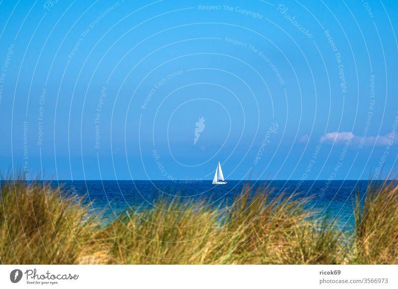 Blick auf die Ostsee mit Segelboot und Düne in Warnemünde Küste Rostock Ostseeküste Meer Ostseebad Mecklenburg-Vorpommern segeln Boot Schiff Dünengras Himmel