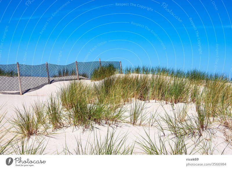 Blick auf eine Düne mit Zaun in Warnemünde Küste Rostock Ostseeküste grün Ostseebad Mecklenburg-Vorpommern Dünengras Himmel blau Sand Gras Dünenzaun wolkenlos