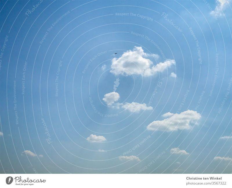 Rabenkrähe hoch oben am leicht bewölkten blauen Himmel Vogel Wildvogel fliegen Freiheit 1 blauer Himmel Sommerhimmel Wolken Natur Umwelt Wölkchen