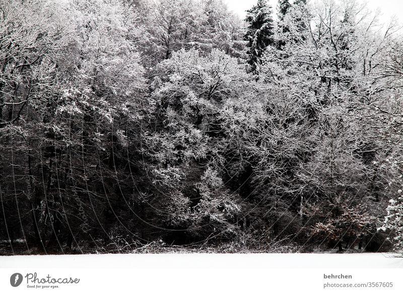 stillstand Pflanze Schneelandschaft Eis Winter Wald Bäume Frost Umwelt Natur Landschaft Winterlandschaft kalt Kälte frieren gefroren Außenaufnahme Baum Idylle