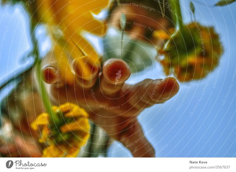 Gärtner mit Maske, der in eine Gruppe von gelben Blumen greift, um eine der gelben Blumen zu pflücken vergilbt Gelbstich gelb-orange gelbgold Hand Garten