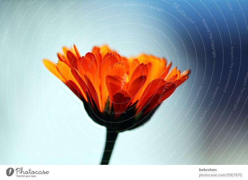 HAPPY BIRTHDAY PHOTOCASE | ein blümchen zum 19.:) orange Frühling Unschärfe Kontrast Licht Tag Menschenleer Detailaufnahme Nahaufnahme Außenaufnahme Hoffnung