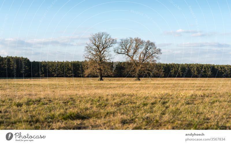 Alte zwei Bäume auf einer Trockenwiese vor einem Wald abgelegen schön groß blau Ast Wolken Farbe farbenfroh Land Landschaft Tag leer Umwelt Europa Feld Gras