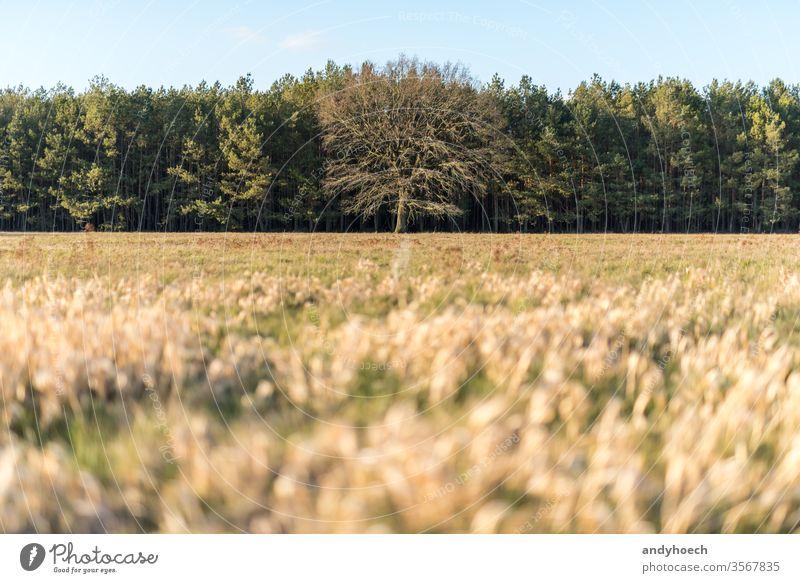 Kahler Baum inmitten von grünen Bäumen und einer trockenen Wiese allein erstaunlich Hintergrund kahl unverhüllt schön Schönheit Ast Cloud farbenfroh Land