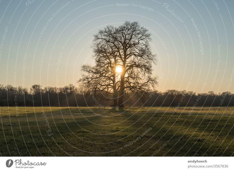 Ein Baumkarpfen auf einer weiten Wiese mit Sonne dazwischen schön Schönheit feiern Feier heiter Land Landschaft Paar Umwelt Familie Feld Wald traumhaft Gras
