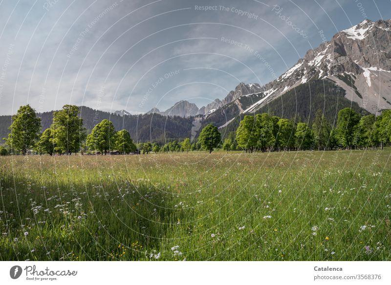 An einem Sommermorgen im Tal, die Blumenwiese, die Bäume und das Gebirge im Hintergrund strahlen Ruhe aus Grün Grau Blau Schönes Wetter Tageslicht Wald Gras