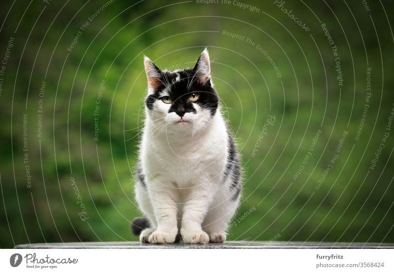 Porträt einer schwarz weißen Katze mit schönem Muster auf dem Gesicht im Freien Haustiere Mischlingskatze Natur Ein Tier grün katzenhaft Fell Textfreiraum