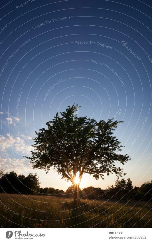 Abendbrotbaum Lifestyle Erholung ruhig Freizeit & Hobby Ferien & Urlaub & Reisen Ausflug Sommerurlaub wandern Natur Landschaft Pflanze Himmel Klima Wetter Baum
