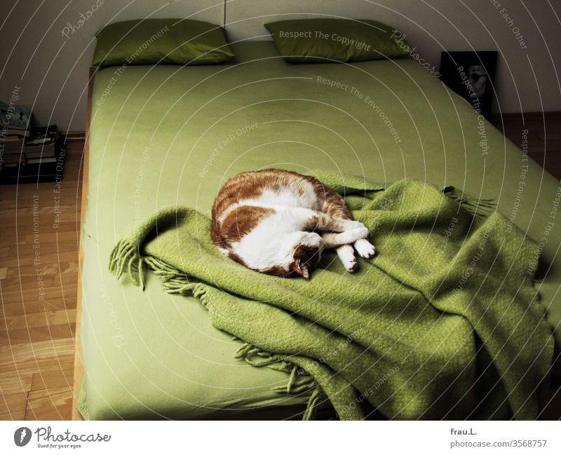 Grün steht mir gut, miaute der rot-weiße Kater und schlief auf dem großen Bett zufrieden ein. Katze Tier Haustier schlafen Wolldecke Kissen Schlafzimmer