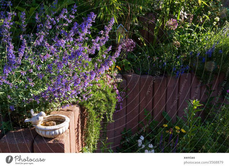 Gartenbild mit Vogeltränke, violetter Katzenminze und rötlicher Palisade aus Stein Natur Sommer Blüte Pflanze Leben Häusliches Leben Bambus Gartenzaun xenias