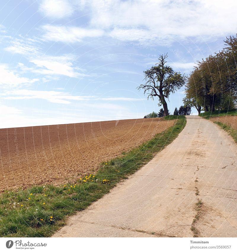 Den Hügel hinauf und dann immer weiter Weg Wege & Pfade Asphalt Feld Wegrand Bäume am Horizont Baum kahl Straße Landschaft Himmel Natur Wolken blau