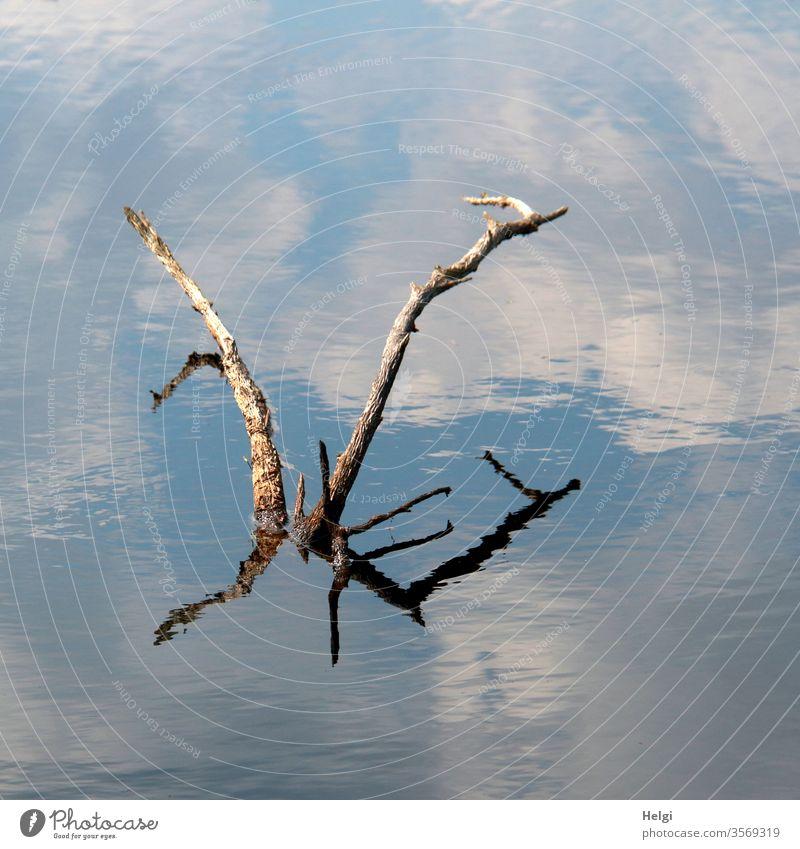 Seeungeheuer - vertrocknete Äste ragen aus einem Moorsee und spiegeln sich und den blauen Himmel mit Wolken Ast Spiegelung schönes Wetter bizarr Natur Umwelt