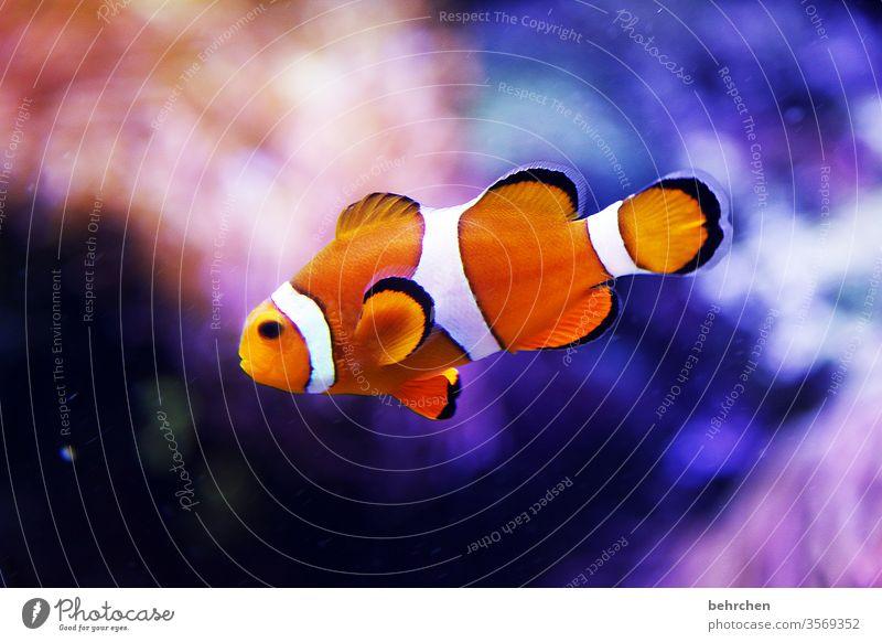 freitagsfischi bunt exotisch Schwimmen & Baden tauchen Nahaufnahme blau Fisch Tier Schuppen schwimmen Aquarium Farbfoto Unterwasseraufnahme Tierporträt
