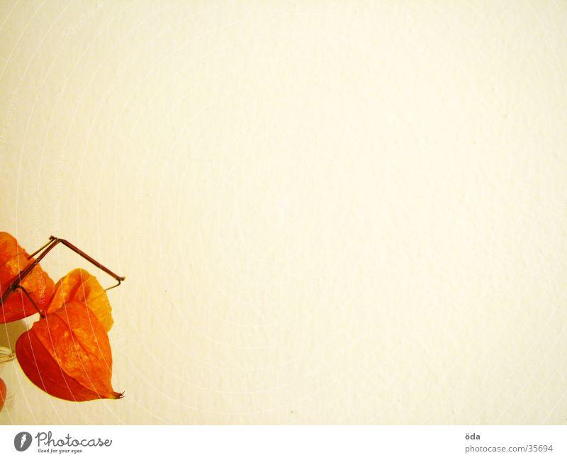 oranges unten links Blume Pflanze Hintergrundbild Zierde Dekoration & Verzierung obskur Anschnitt
