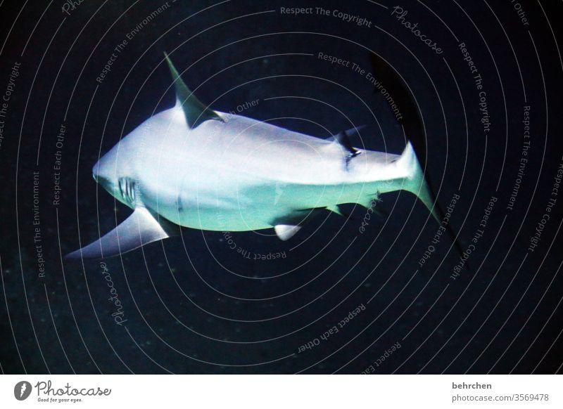freitags gibts fisch Tierporträt Unschärfe Kontrast Schatten Licht Tag Menschenleer Farbfoto Flosse dunkel gefährlich Angst außergewöhnlich Schwimmen & Baden