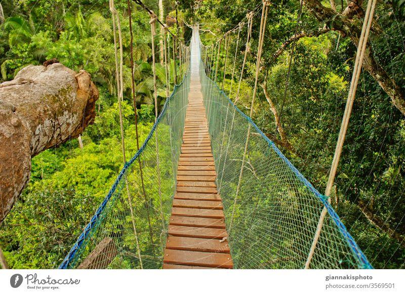 Hängebrücke zwischen zwei grossen Bäumen, Amazonasbecken, Peru, Südamerika Abenteuer Amazonas-Becken schön Schönheit der Natur Farbe farbenfroh extrem Dschungel