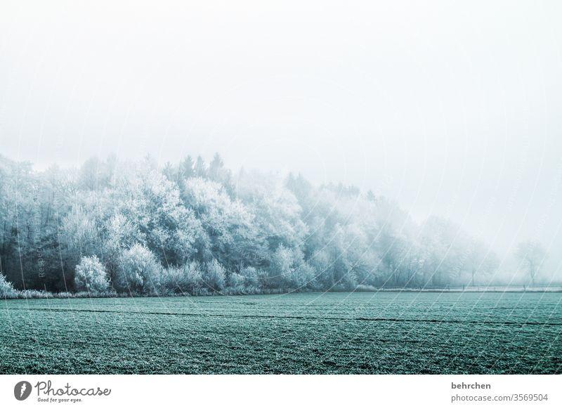 wintermärchen Winter Wald Schnee Bäume Frost Landschaft Natur Umwelt Wiese Feld Herbst laub Herbstlaub Herbstlandschaft Winterlandschaft kalt Kälte frieren