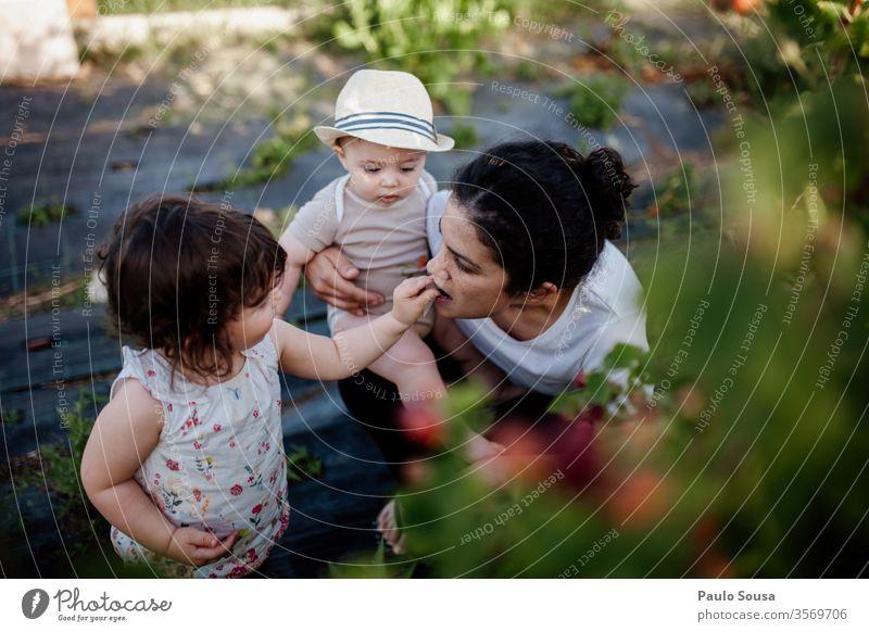 Tochter gibt der Mutter Brombeeren Familie & Verwandtschaft Geschwister 3-8 Jahre Kind Kindheit Farbfoto Mensch Mädchen Zusammensein Junge Bruder 2 Kleinkind