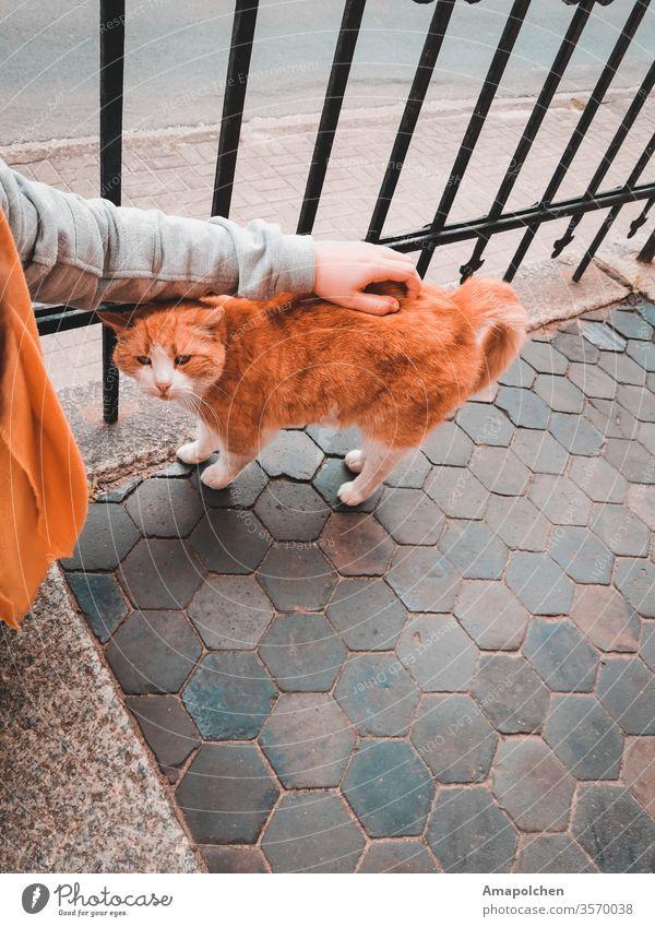Straßenkatze Katze Frau Haustier Kuscheln Liebe trösten Liebeskummer Kummer sorgenfrei Traurigkeit Trauer Geborgenheit Depression Burnout rot Tier Tierporträt 1