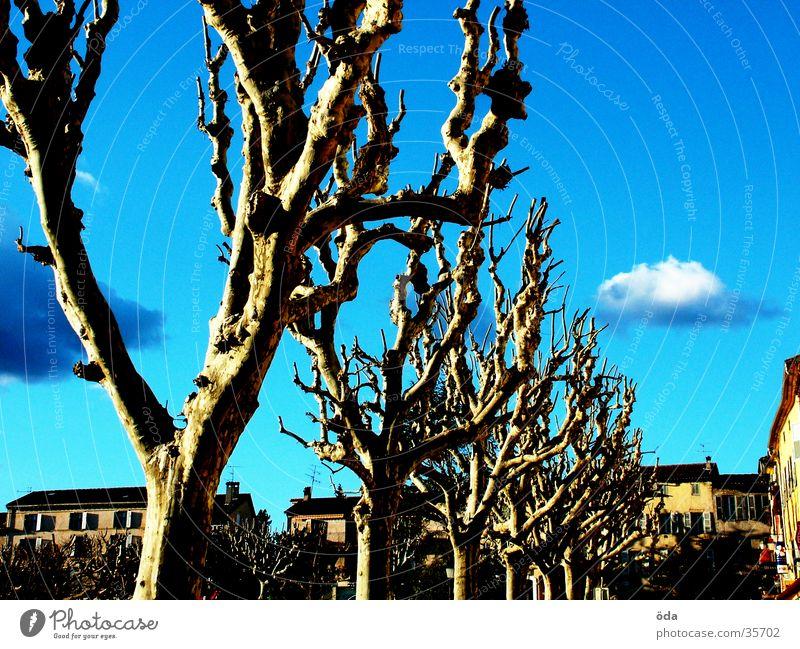 Baumschnitt Himmel Baum Wolken Tod Anschnitt Haarschnitt karg