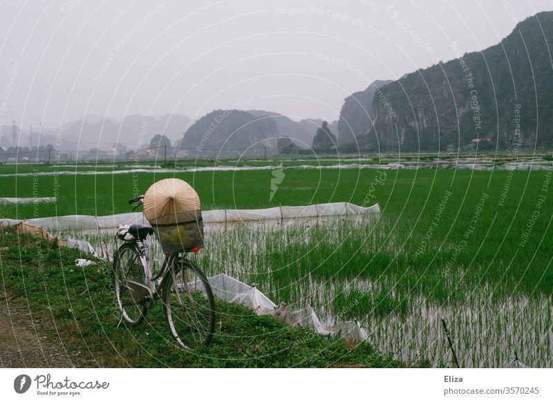 Ein Fahrrad mit einem Kegelhut vor grünen Reisfeldern in Ninh Binh, Vietnam Reishut Landschaft Reisanbau asiatisch Asien Lebensmittel Feld anbauen
