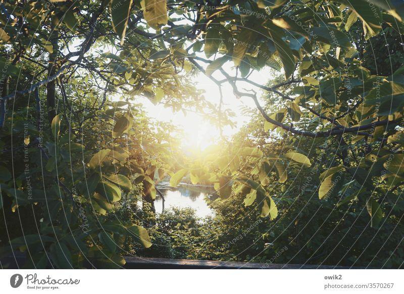 Blätterdach Wien Park Baum Sonne Sonnenuntergang Gegenlicht Sonnenlicht leuchten strahlend geheimnisvoll Menschenleer Sonnenstrahlen Schatten Tag Umwelt Wald