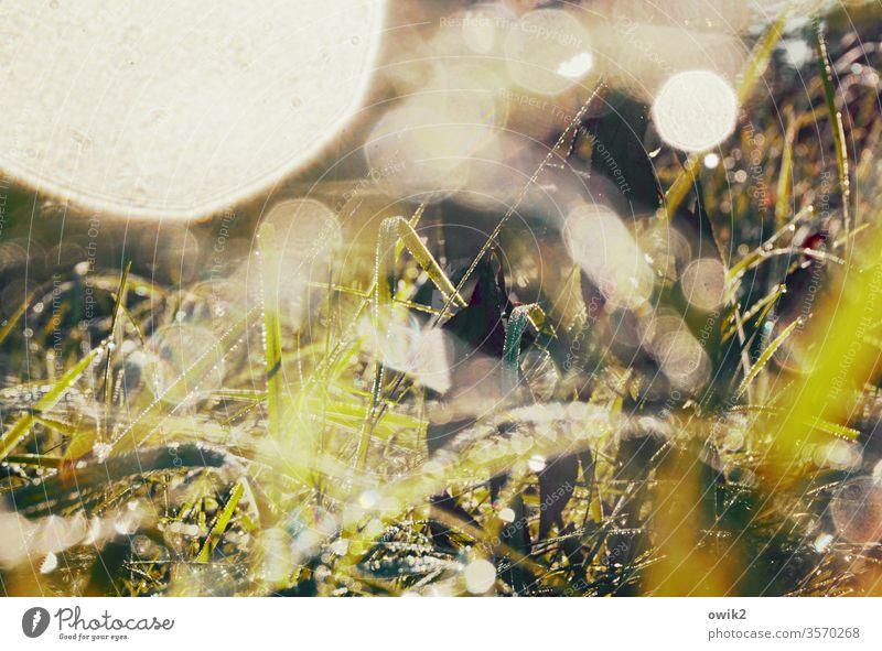 Nasses Chaos geheimnisvoll Gras nass Wassertropfen glitzernd leuchtend Detailaufnahme grün Natur Wiese Regen Makroaufnahme Farbfoto Menschenleer Nahaufnahme
