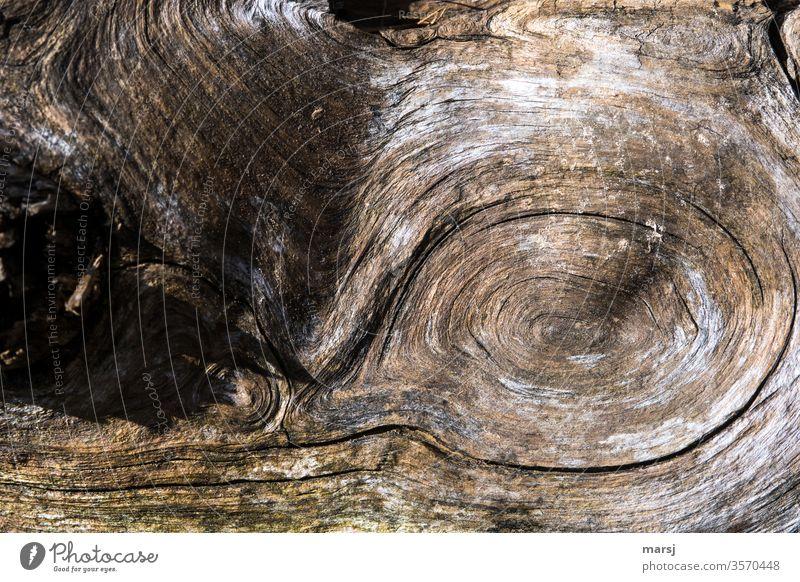 Holz mit Struktur Maserung Schleife Holzmaserung Kraft braun Detailaufnahme verwachsen gewellt schwungvoll Natur sonderbar alt eigenartig Strukturen & Formen
