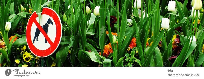 HUNDE RAUS Blume grün Pflanze Blüte Garten Hund Schilder & Markierungen Blühend Verbote