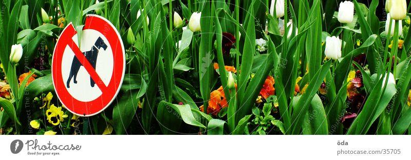 HUNDE RAUS Verbote Blume Hund Blüte grün Schilder & Markierungen Garten Blühend Pflanze