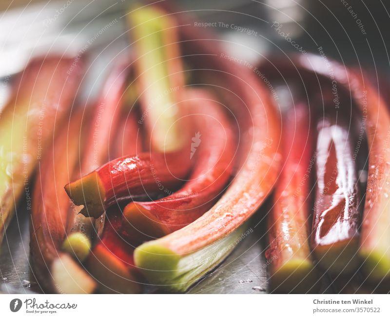 Nass glänzende Rhabarberstangen liegen nebeneinander, Nahaufnahme mit schwacher Tiefenschärfe frisch Gesunde Ernährung Vegetarische Ernährung Vitamin neue Ernte
