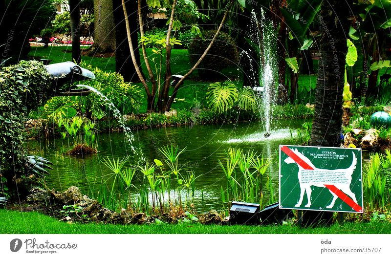 Garten mag keine Hunde Wasser Baum grün Pflanze Schilder & Markierungen Brunnen Verbote Englisch