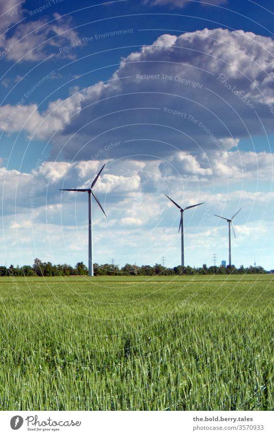 Windräder und Weizenfeld Windrad Windenergie Energie Erneuerbare Energie Energiewirtschaft Farbfoto Außenaufnahme Menschenleer Umweltschutz