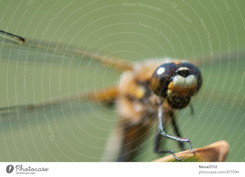 Neugier... Natur grün Sommer Erholung Tier Umwelt Auge Wiese Frühling See Luft fliegen stehen Schönes Wetter beobachten Flügel