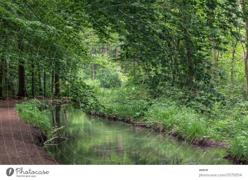 dunkler Pfad in den Wäldern Hintergrund Niederlassungen Kastanie Textfreiraum Zaun Wald Schneise grüne Blätter Landschaft einsam schlammig Natur niemand