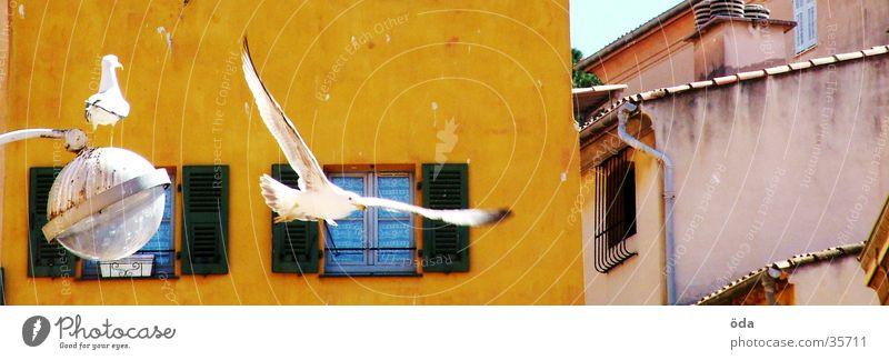 mediterrane Vogelschau Taube Haus Laterne weiß Nizza Luftverkehr fliegen Flügel