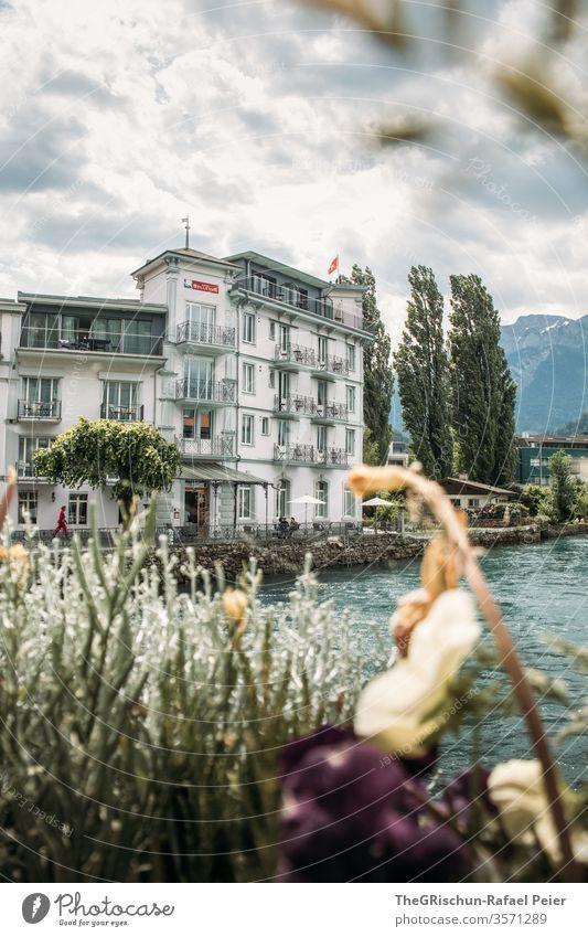 Blick auf ein Historisches Haus am Fluss Interlaken Schweiz Tourismus Baum Außenaufnahme Farbfoto Menschenleer Tag Ferien & Urlaub & Reisen Ausflug Sommer