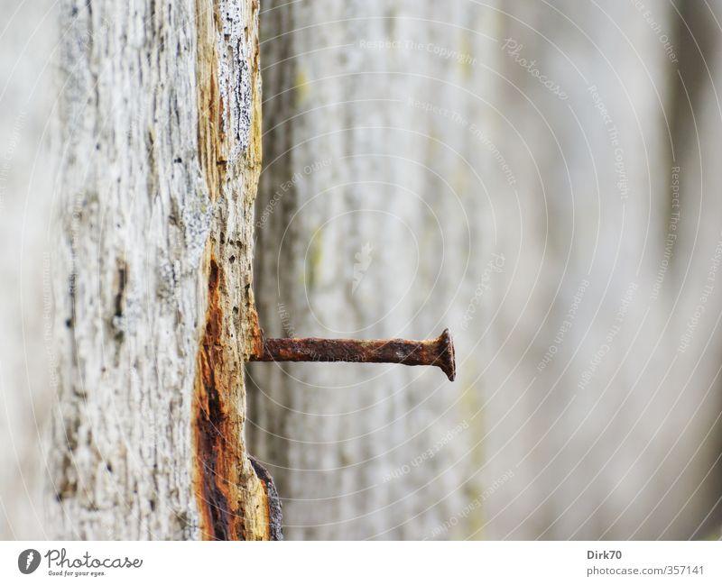 Nachschlag nötig Mauer Wand Nagel Holz Metall alt eckig fest Spitze stark trist braun grau rot schwarz weiß Verlässlichkeit Senior Einsamkeit Nostalgie Risiko