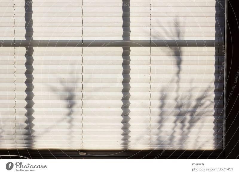 Faltgardine vor Blumen schwarz grau weiß Zierde Vorhang Falten Textilien Wohnung Raffung Schmuck Verzierung Epoche Mode Gestaltung Dekoration Zug Pflanze Gras
