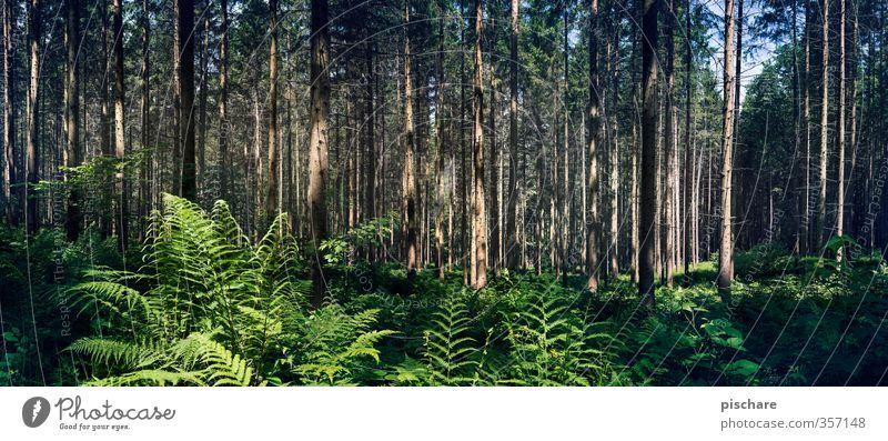 Endor Natur Pflanze Baum Landschaft Wald dunkel Sträucher exotisch Farn