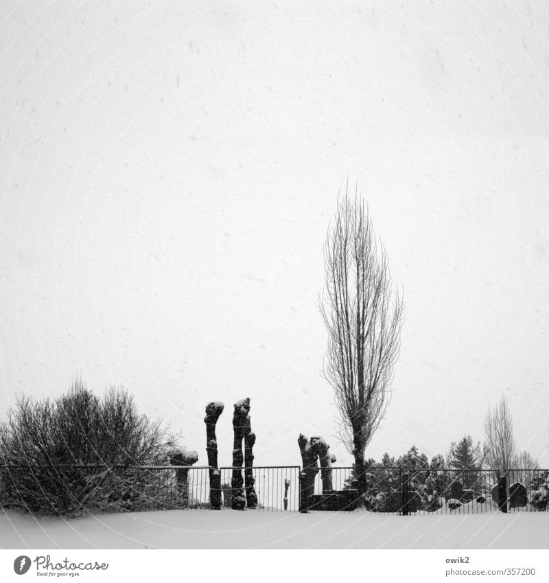 Jüdischer Friedhof Himmel alt Pflanze Baum Traurigkeit Schnee Tod hell Schneefall Wetter Eis Sträucher Klima Vergänglichkeit Ewigkeit Hoffnung
