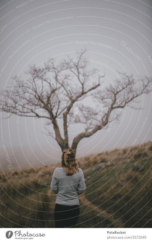 #As# Grey Day mystisch Landschaft Natur Außenaufnahme Farbfoto Wege & Pfade Neuseeland Landschaft erkunden spazierend Spazieren gehen spazierengehen laufen Baum