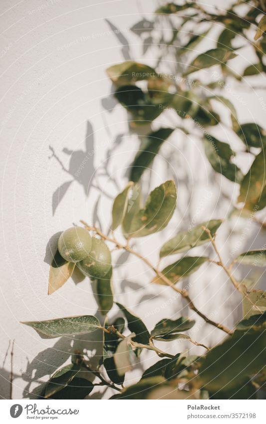 #As# Limettengrün limetten Garten anpflanzen Ernte erntereif Grünpflanze Lebensmittel Außenaufnahme frisch Frucht Blatt